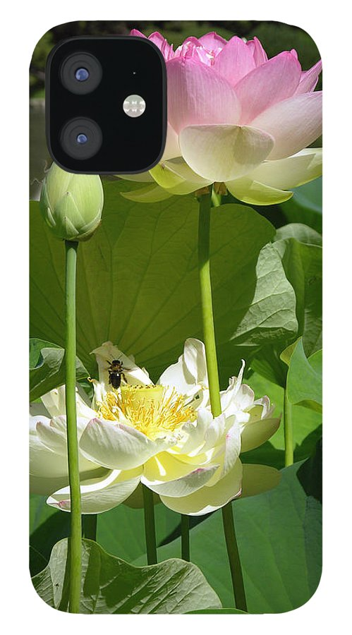 Lotus iPhone 12 Case featuring the photograph Lotuses in Bloom by John Lautermilch