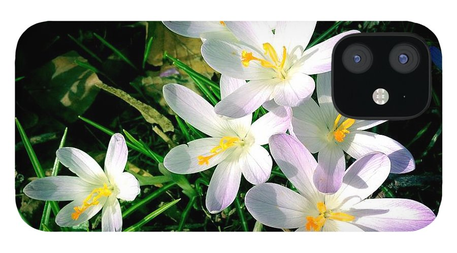 Flowers IPhone 12 Case featuring the photograph Lovely flowers in spring by Matthias Hauser