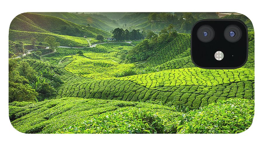 Cameron Highlands iPhone 12 Case featuring the photograph Malaysia, Pahang, Cameron Highlands by Cescassawin
