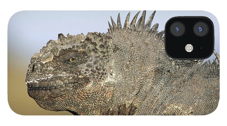 Feb0514 IPhone 12 Case featuring the photograph Marine Iguana Male Santa Cruz Island by Tui De Roy
