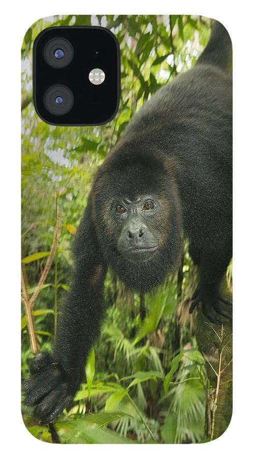 Kevin Schafer iPhone 12 Case featuring the photograph Mexican Black Howler Monkey Belize by Kevin Schafer
