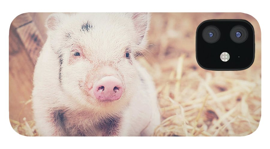 Pig IPhone 12 Case featuring the photograph Micro Pig by Samantha Nicol Art Photography