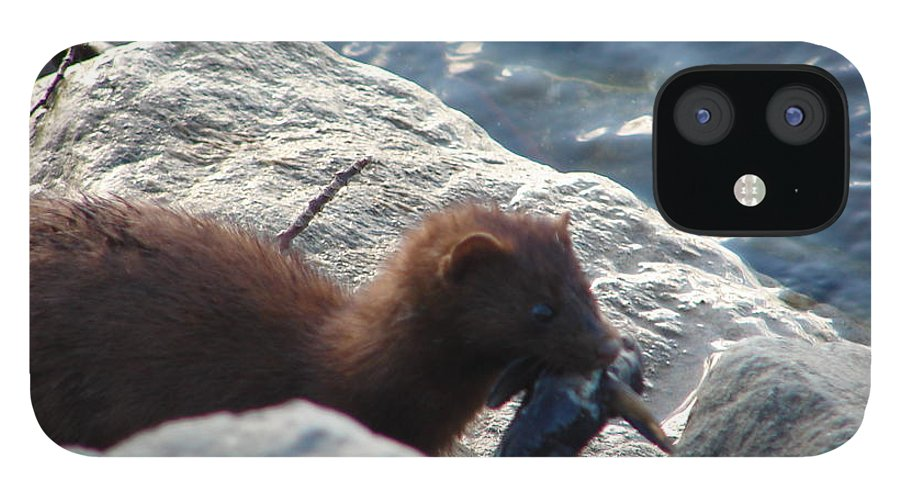 American Mink IPhone 12 Case featuring the photograph Mink with a Round Goby by Randy J Heath