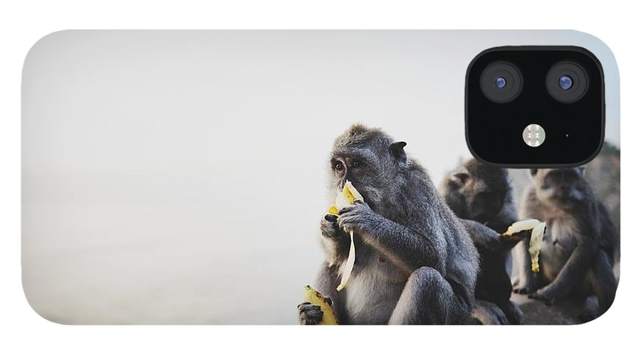 In A Row IPhone 12 Case featuring the photograph Monkeys Eating Bananas by Carlina Teteris