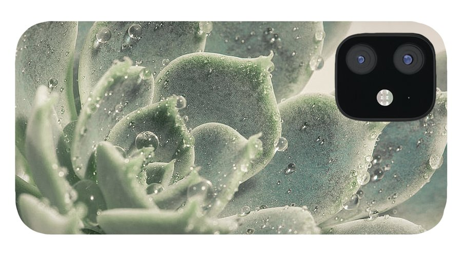 Succulent IPhone 12 Case featuring the photograph Morning Dew Drops by Lucid Mood