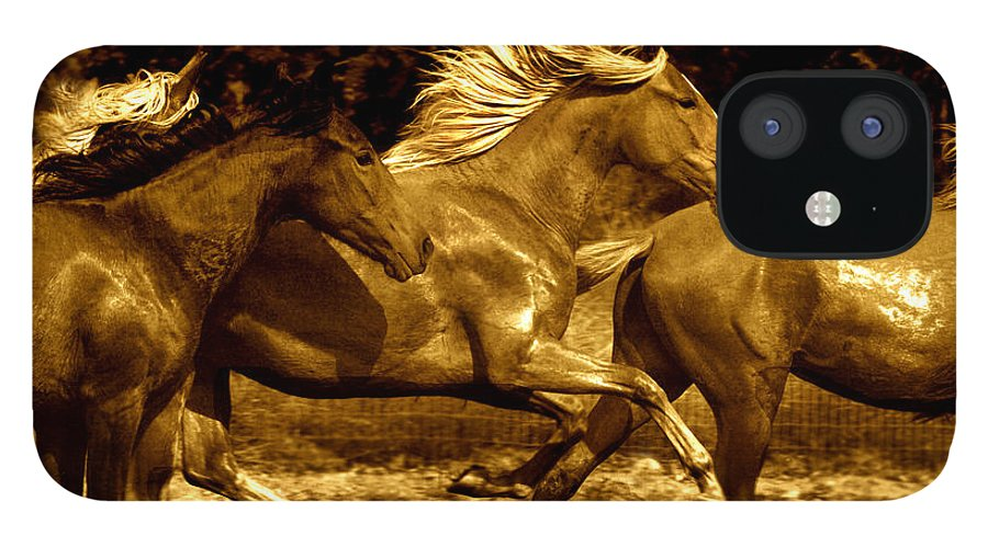 A Herd Of Paso Finos Run In A Pasture On A Ranch Near Santa Fe IPhone 12 Case featuring the photograph Morning Run by Lourie Zipf