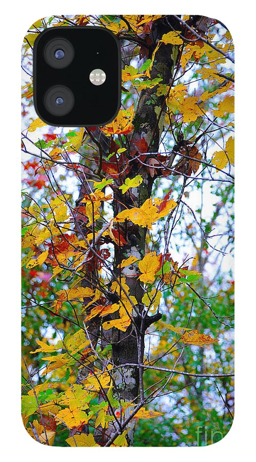 Fall Leaves IPhone 12 Case featuring the photograph November Leaves by Leon Hollins III