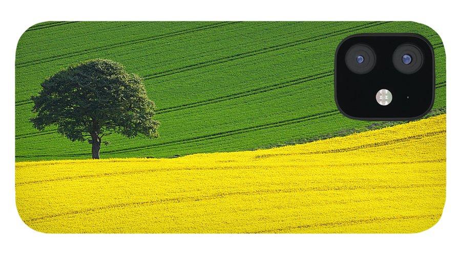 Rape Seed IPhone 12 Case featuring the photograph Oak tree split by Richard Thomas