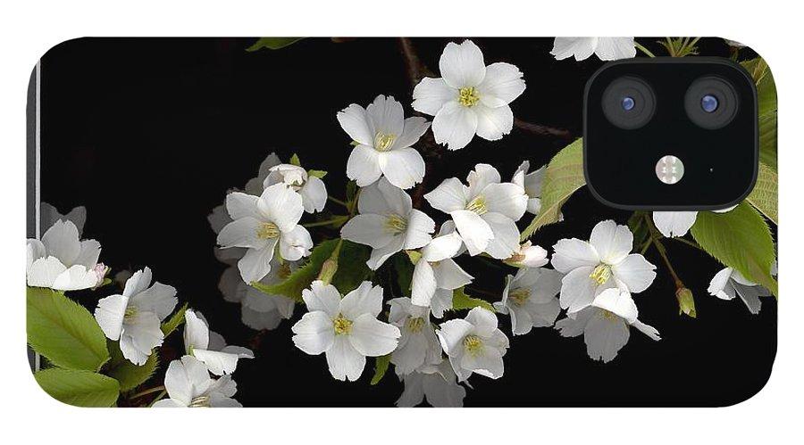 Ornamental Prunus iPhone 12 Case featuring the digital art Ornamental Prunus by Sandi F Hutchins
