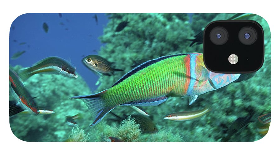 Underwater iPhone 12 Case featuring the photograph Ornate Wrasse by Gerard Soury
