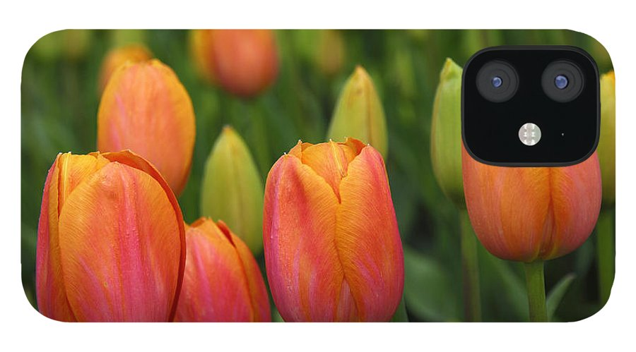 Tulips IPhone 12 Case featuring the photograph Pacific Northwest Tulips 3 by Keith Gondron
