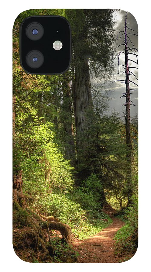 Tranquility IPhone 12 Case featuring the photograph Path Through Redwood Forest by Ed Freeman