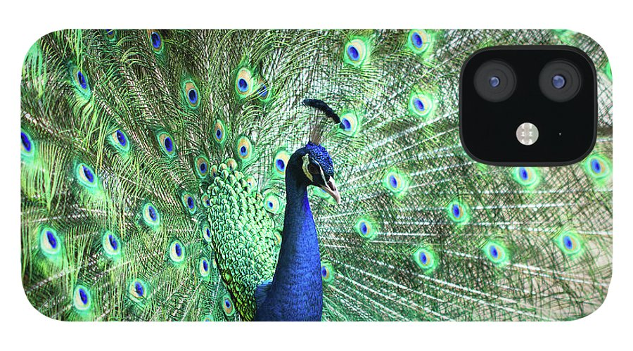 Male Animal IPhone 12 Case featuring the photograph Peacock by Pengpeng