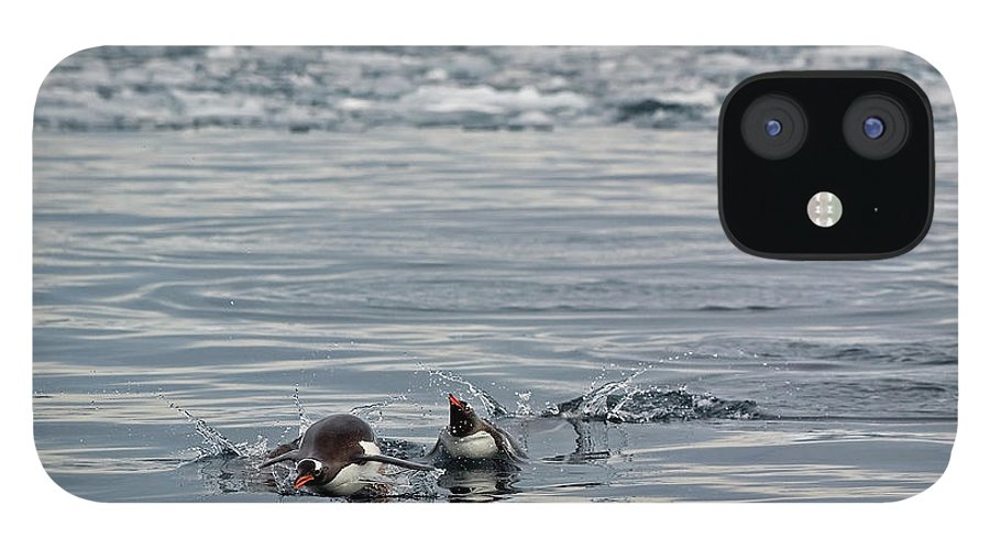 Iceberg IPhone 12 Case featuring the photograph Penguins In The Water by Jim Julien / Design Pics
