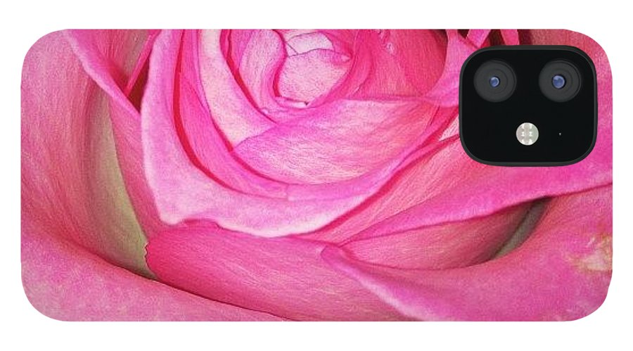 Pink IPhone 12 Case featuring the photograph #pink #rose #pinkrose #nature by Amber Campanaro