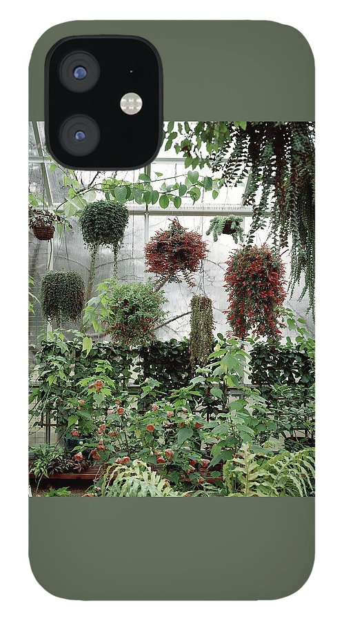 Plants Hanging In A Greenhouse IPhone 12 Case