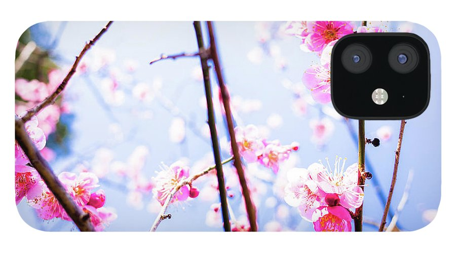 Plum IPhone 12 Case featuring the photograph Plum Blossoms In Bloom by Marser