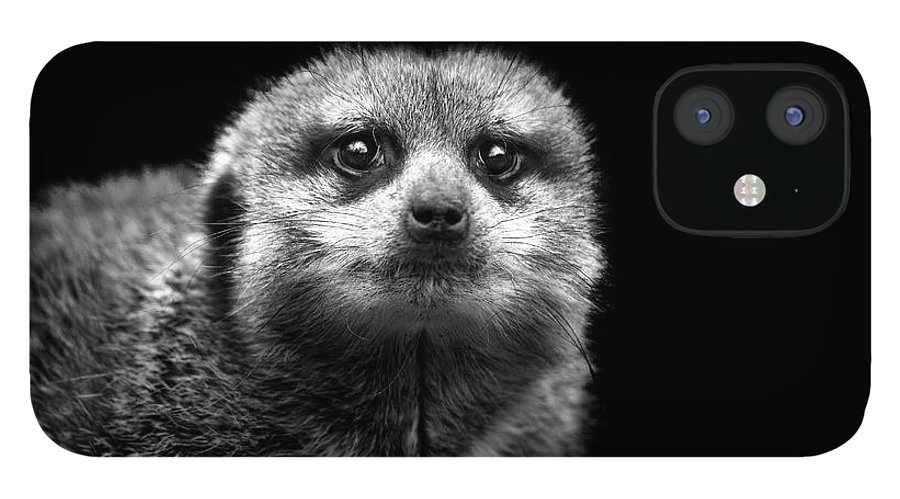 Alertness IPhone 12 Case featuring the photograph Portrait Of Meerkat by Malcolm Macgregor