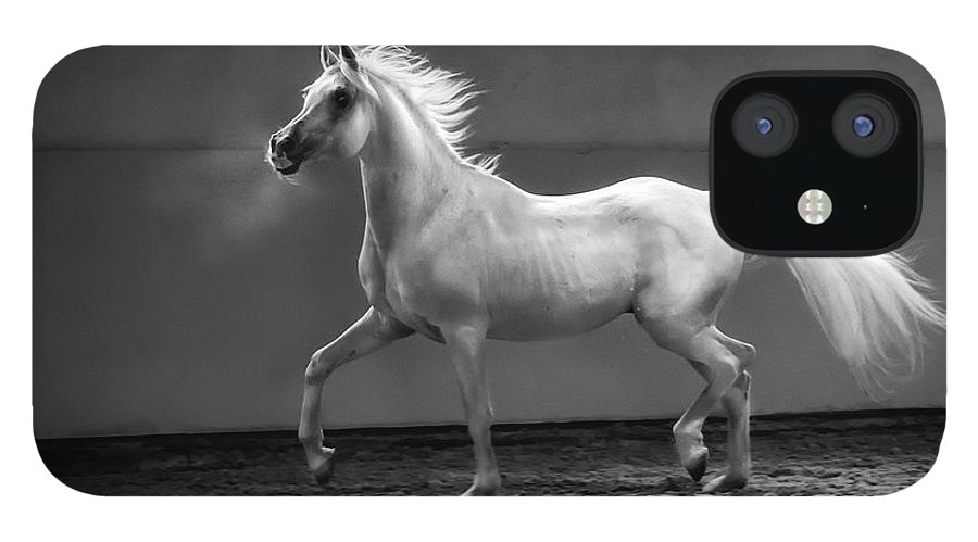 Horse IPhone 12 Case featuring the photograph Proud Arabian Horse - Stallion In by Kerrick