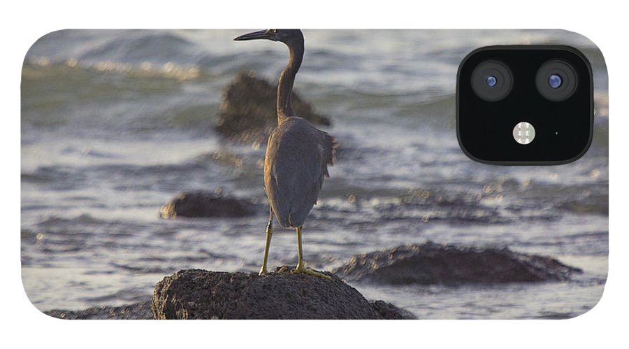 Reef Egret IPhone 12 Case featuring the photograph Reef Egret by Douglas Barnard