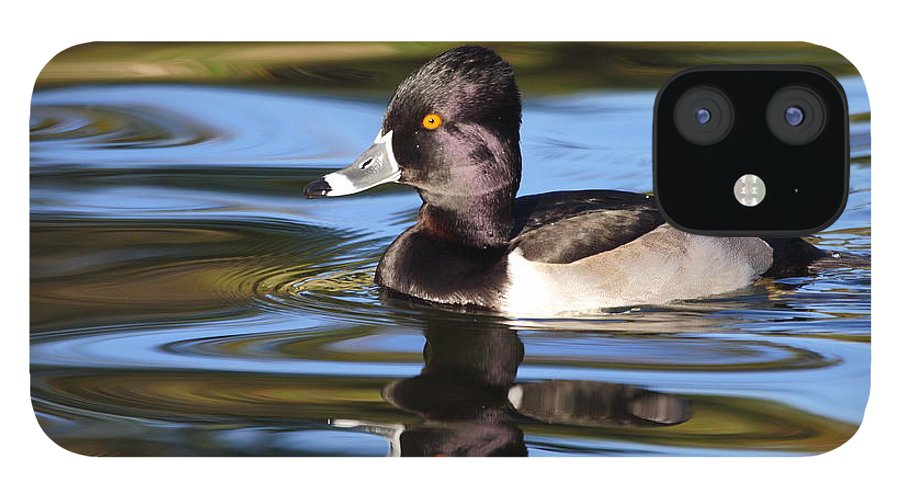 Ring-necked Duck IPhone 12 Case featuring the photograph Rings around Ring-necked Duck by Andrew McInnes