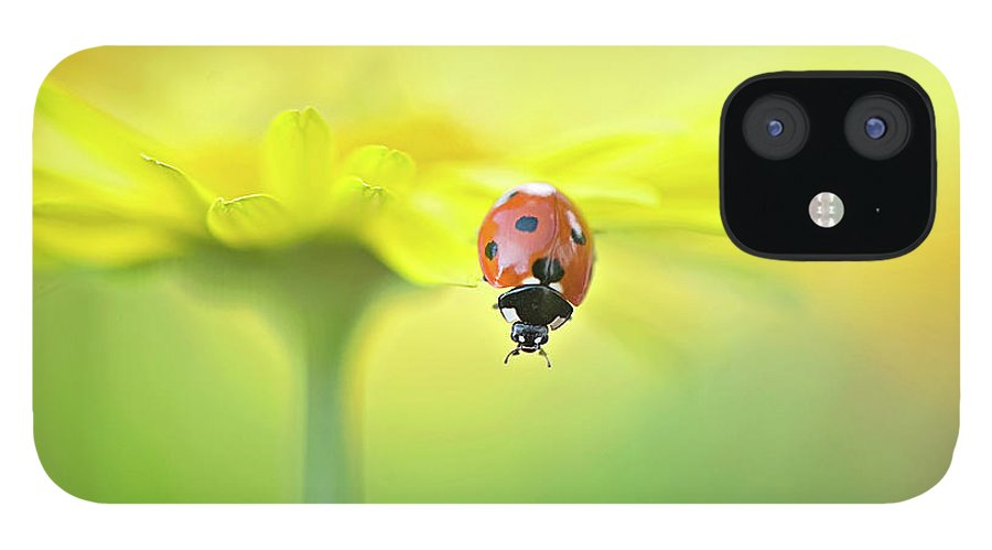 Buckinghamshire IPhone 12 Case featuring the photograph Seven Spot Ladybird On Yellow Flower by Jacky Parker Photography