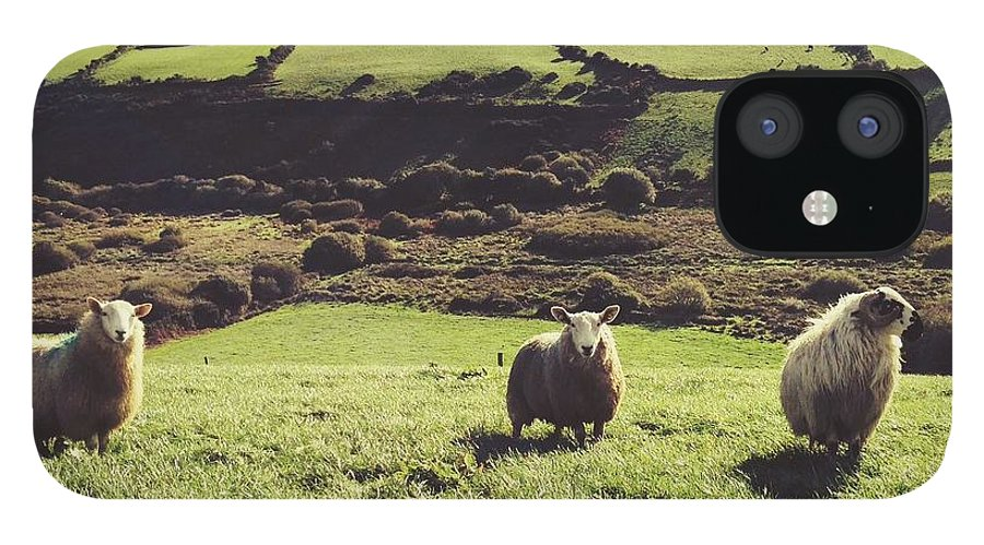 Pets IPhone 12 Case featuring the photograph Sheep Standing In Field by Thomas Peham / Eyeem