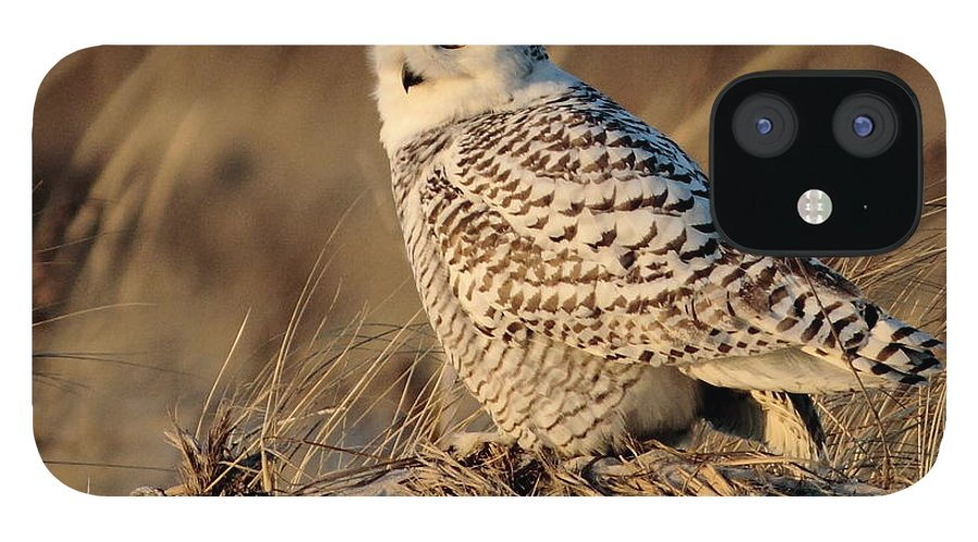 Snowy Owl IPhone 12 Case featuring the photograph Snowy by Linda C Johnson