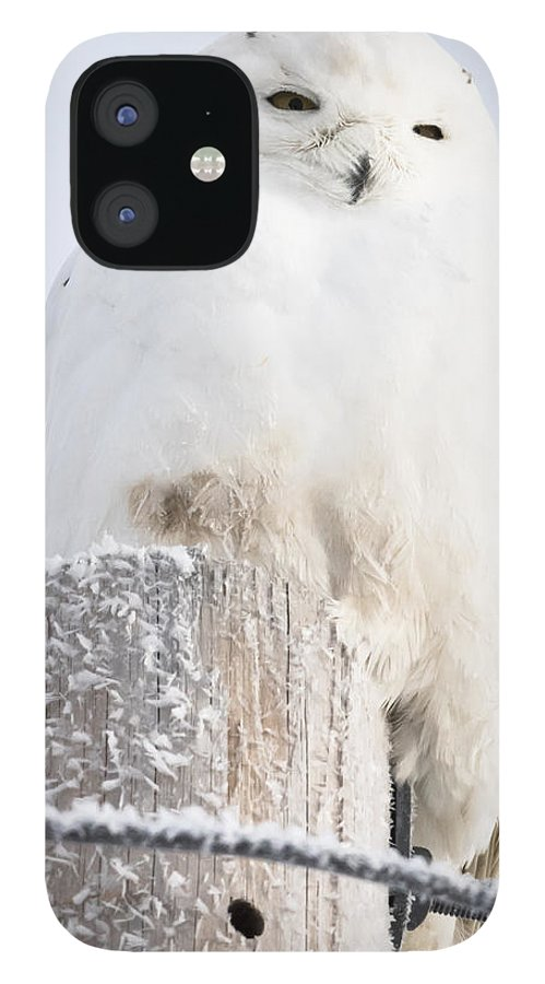 Canon IPhone 12 Case featuring the photograph Snowy Owl by Ricky L Jones