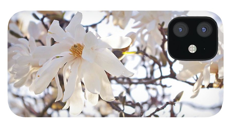 Magnolia Stellata IPhone 12 Case featuring the photograph Spring Flowers by Sharon Popek