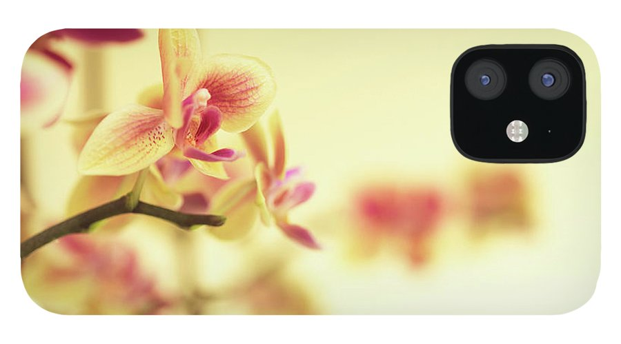 Purple iPhone 12 Case featuring the photograph Stem Of Orchids by Jlph