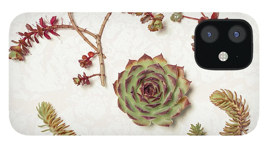 Succulent IPhone 12 Case featuring the photograph Succulent Collection by Lucid Mood