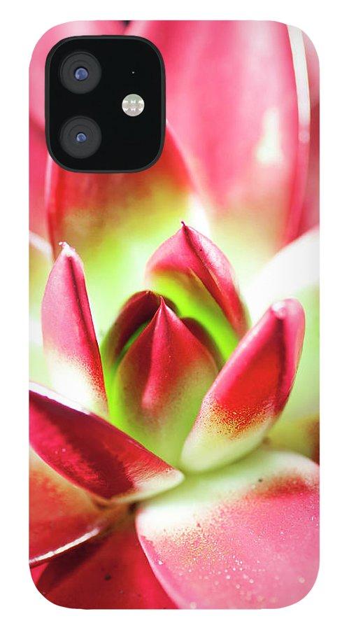 Cut Out IPhone 12 Case featuring the photograph Succulent Echeveria by Lrescigno