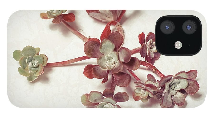 Succulent IPhone 12 Case featuring the photograph Succulent Plant 1 by Lucid Mood