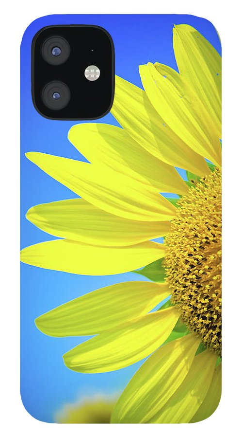 Clear Sky IPhone 12 Case featuring the photograph Sunflower Against Blue Sky by N. Umnajwannaphan