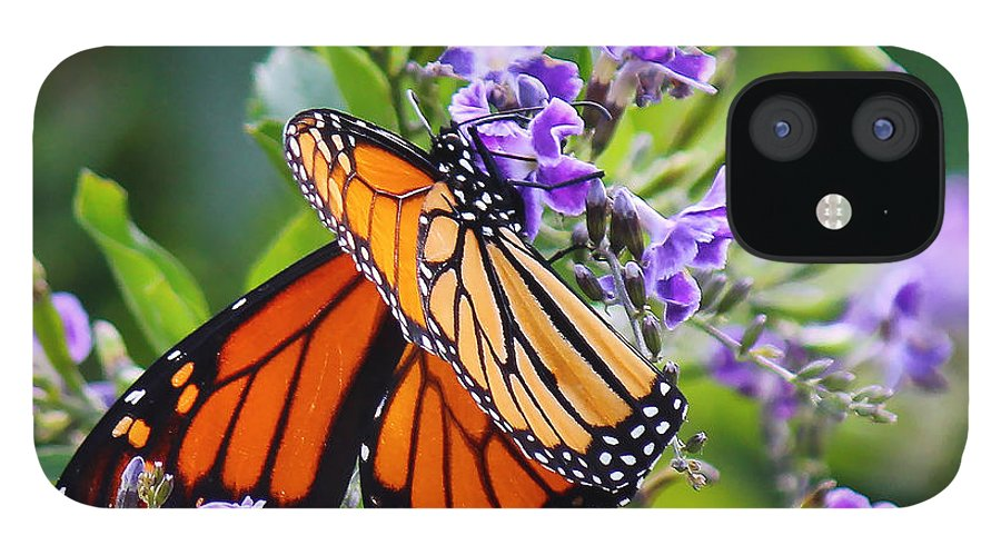 Butterfly IPhone 12 Case featuring the photograph Sweet Nectar by Pat McGrath Avery