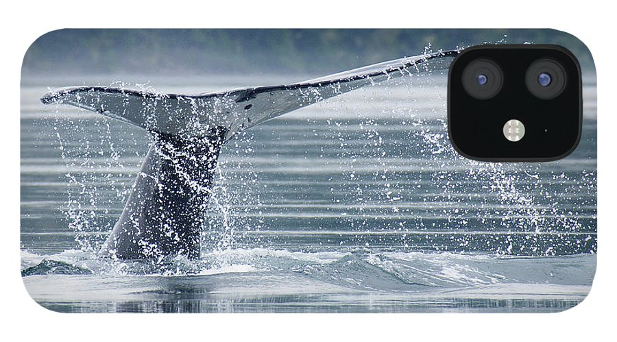 One Animal IPhone 12 Case featuring the photograph Tail Of Humpback Whale by Grant Faint