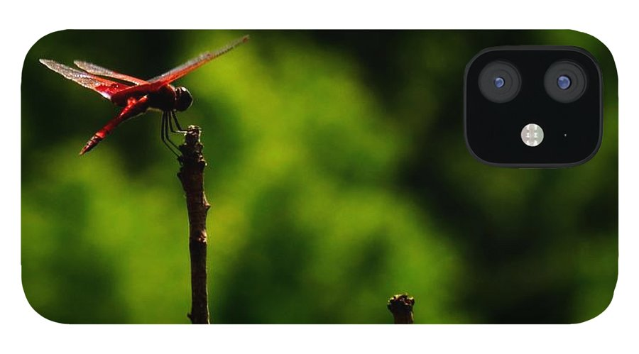 Dragonfly IPhone 12 Case featuring the photograph Tallest Dragonfly Post by Rrrose Pix