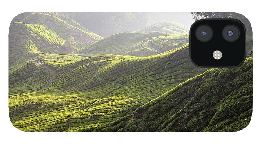 Tranquility iPhone 12 Case featuring the photograph Tea Estate by Daniel Osterkamp