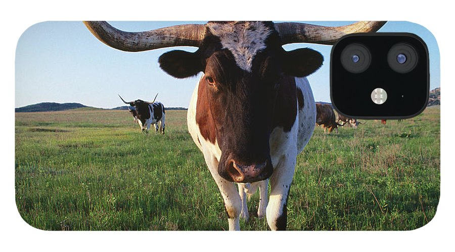Horned IPhone 12 Case featuring the photograph Texas Longhorn Cattle by John Elk