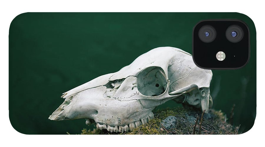 Animal Skull IPhone 12 Case featuring the photograph The Deer Bone by Kei Uesugi