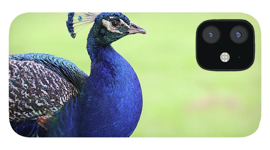Indian Peafowl IPhone 12 Case featuring the photograph The Profile Shot by Daniela Duncan