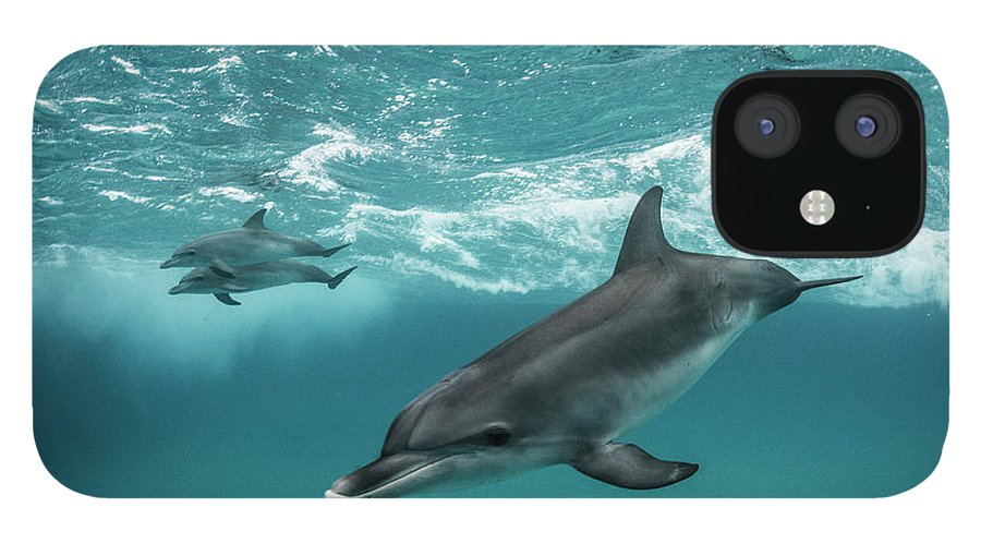 Tranquility IPhone 12 Case featuring the photograph Three Atlantic Spotted Dolphins by Rodrigo Friscione