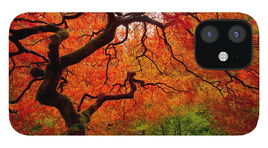 Portland iPhone 12 Case featuring the photograph Tree Fire by Darren White