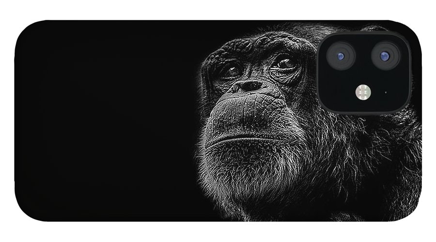 Chimpanzee IPhone 12 Case featuring the photograph Trepidation by Paul Neville