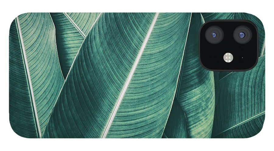 Spa IPhone 12 Case featuring the photograph Tropical Palm Leaf, Dark Green Toned by Pernsanitfoto