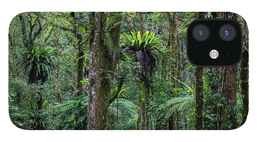 Tropical Rainforest IPhone 12 Case featuring the photograph Tropical Rain Forest by Gavriel Jecan