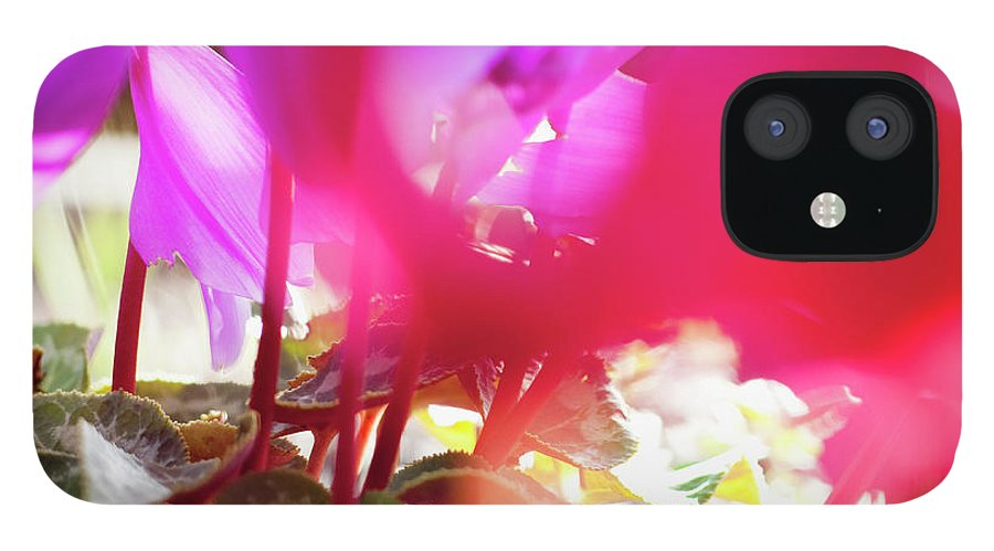 Shadow IPhone 12 Case featuring the photograph Vibrant Magenta Cyclamen In Bloom by Erika Pino