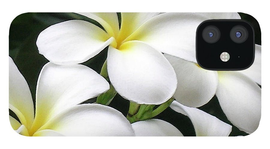 Hawaii Iphone Cases IPhone 12 Case featuring the photograph White Plumeria by James Temple