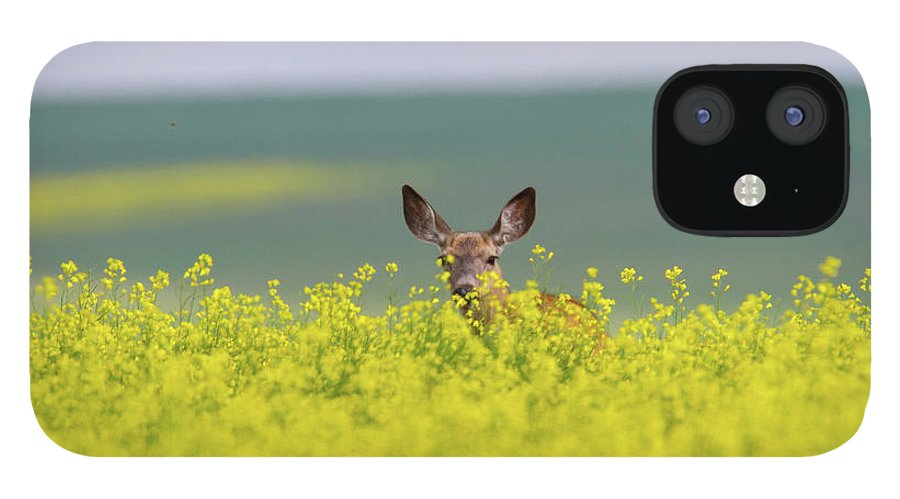 Alertness iPhone 12 Case featuring the photograph White-tailed Doe by Ed Matuod